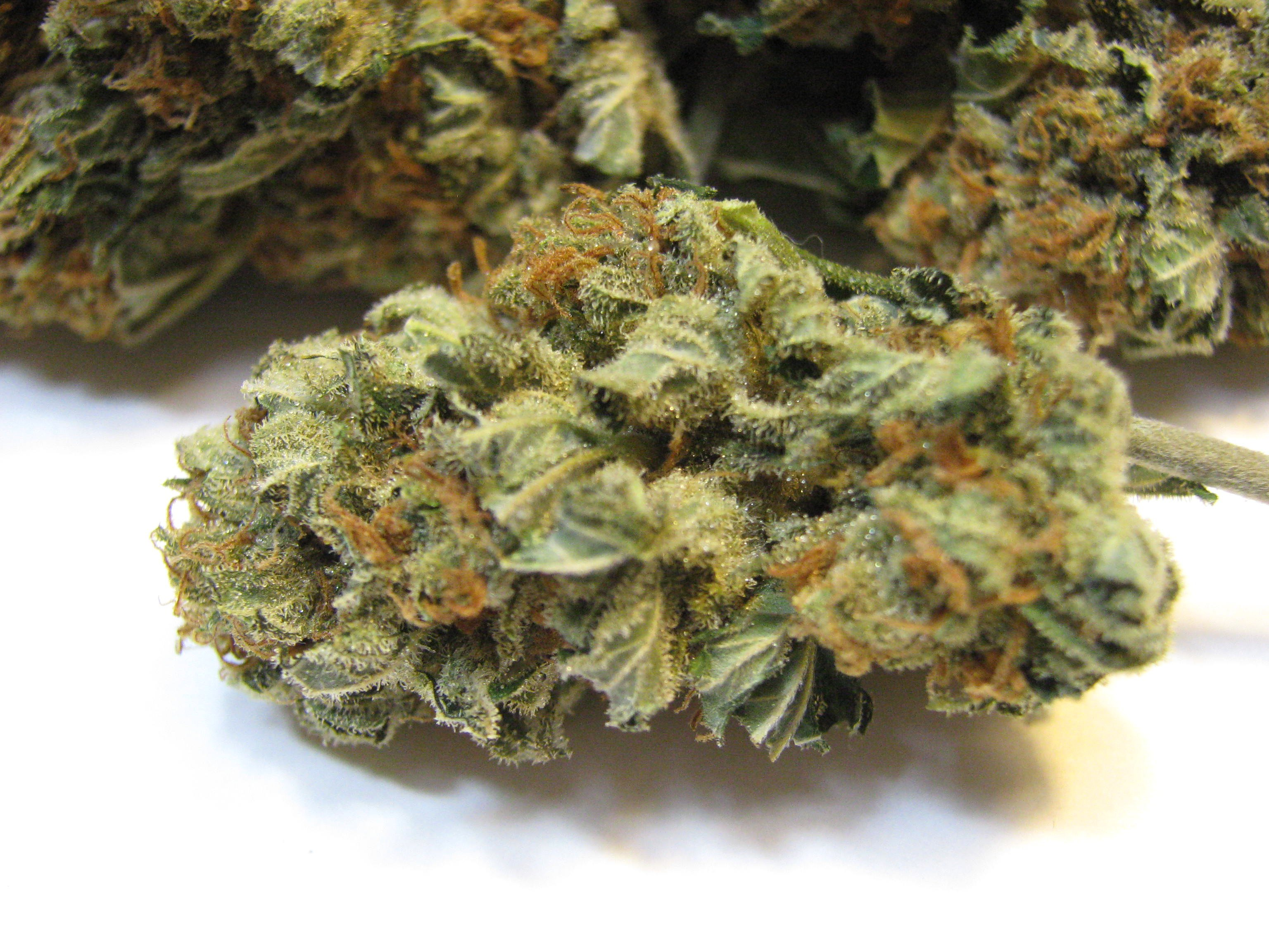 WSS Skunk Grow and Smoke Report (Weed Seed Shop ...