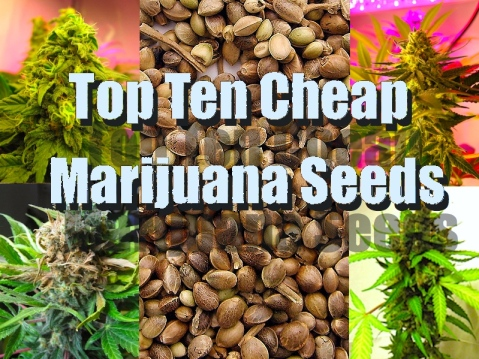 Our Cheap Image For Our Cheap Seeds Review!