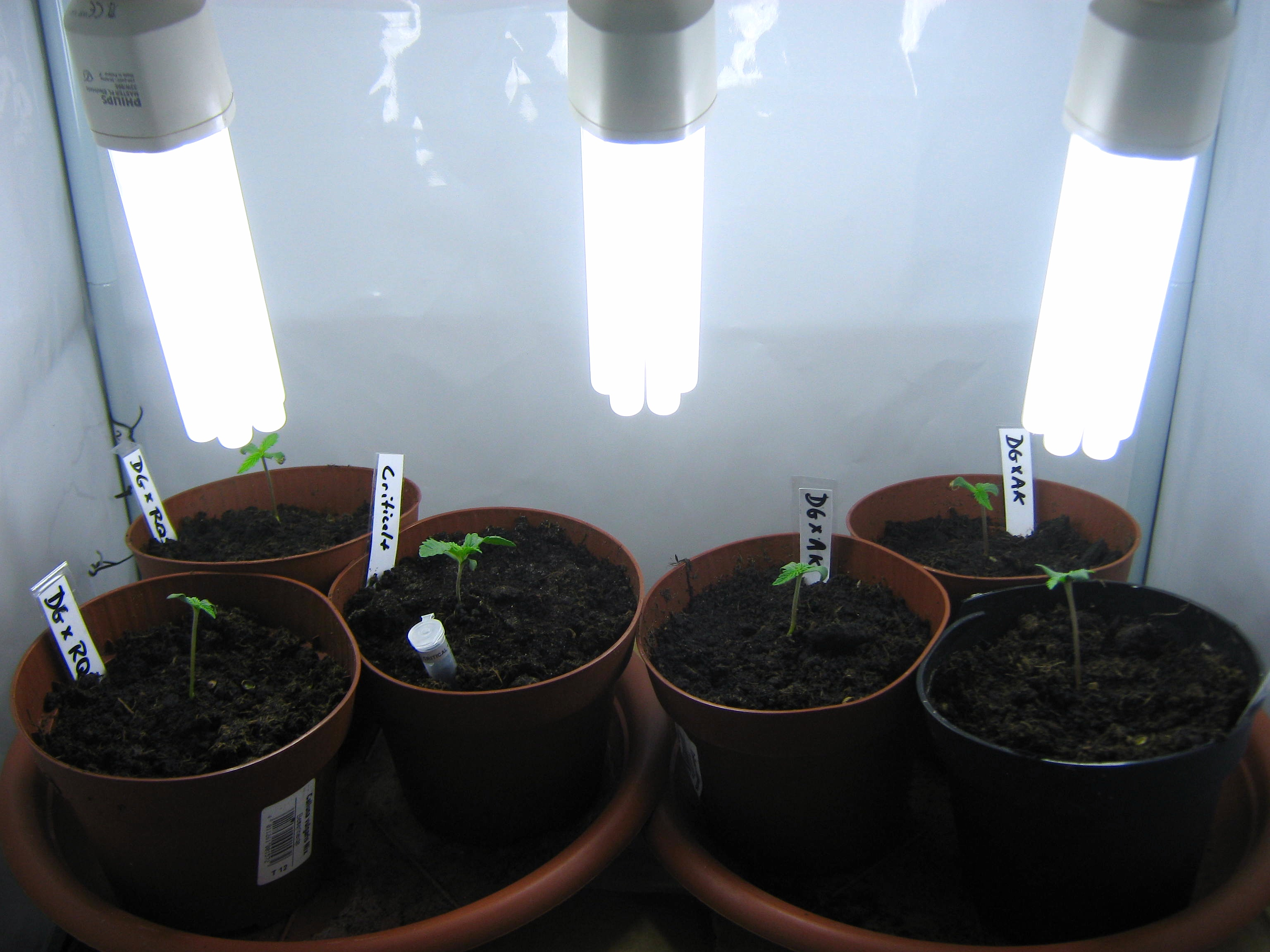 August 2013 Cannabis Growing